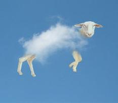Mouton nuage