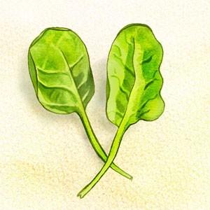 Assiette naturo - épinards